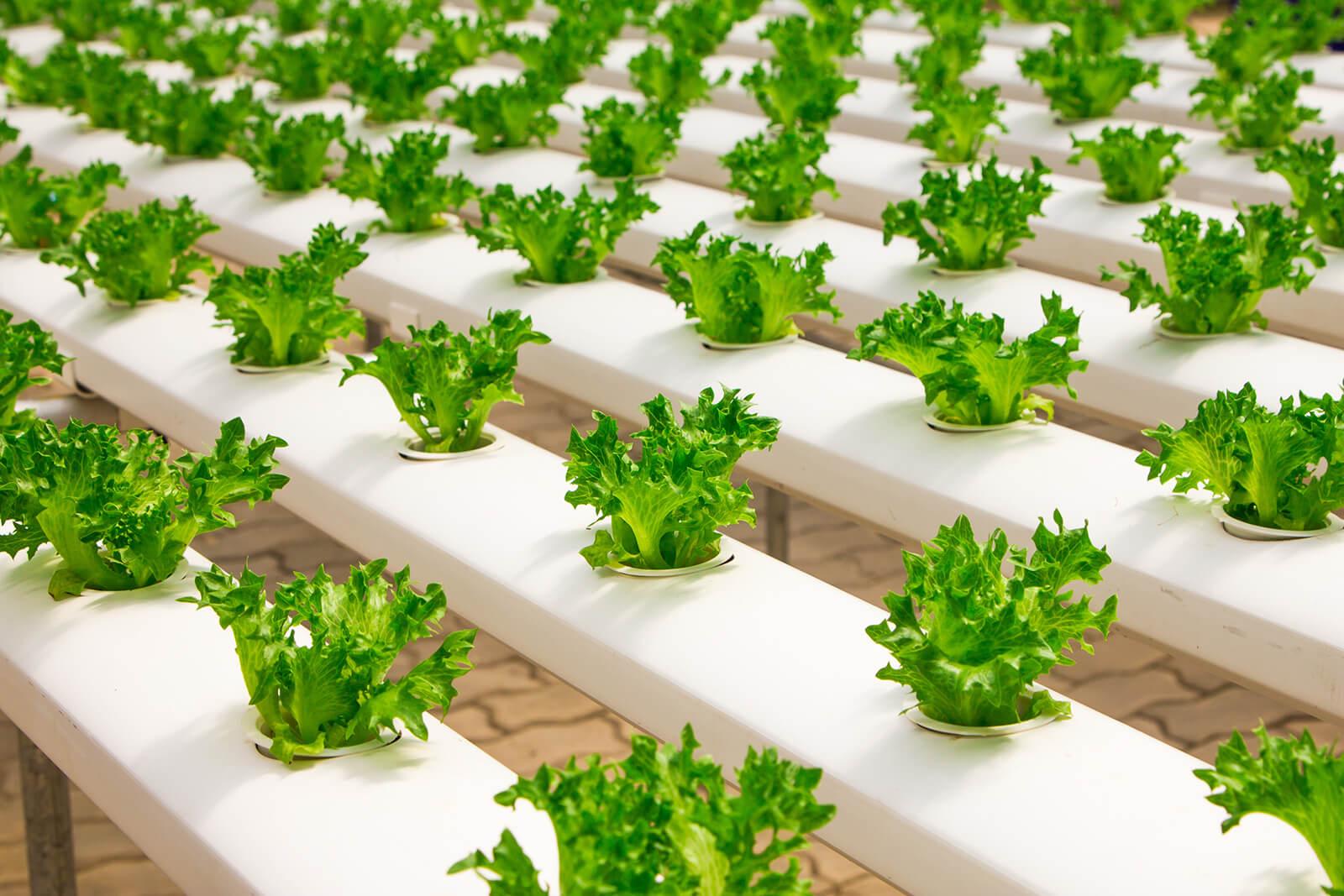 landbouwsubsidies - landbouwsubsidies